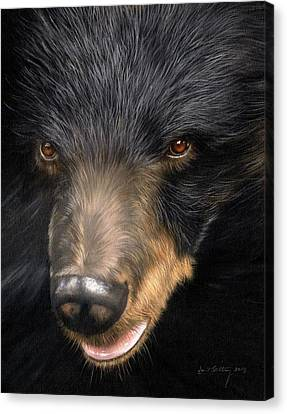 Trixie Moon Bear - In Support Of Animals Asia Canvas Print by David Stribbling