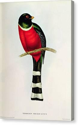Trogon Mexicanus Canvas Print by John Gould