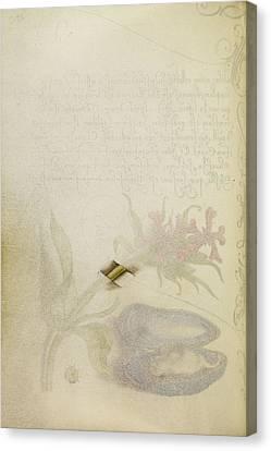 Trompe Loeil Stem Of A Maltese Cross Joris Hoefnagel Canvas Print