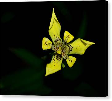 Tropic Yellow Canvas Print by Miguel Winterpacht