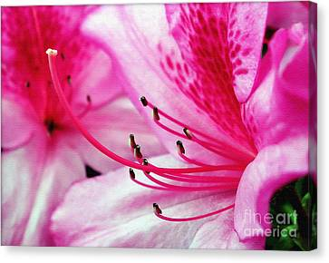 Tropical Azalea Canvas Print by Kaye Menner