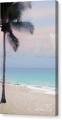 Tropical Beach Dawn Canvas Print by Betty LaRue