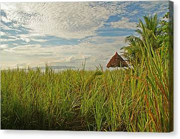 Canvas Print featuring the photograph Tropical Beach Landscape by Peggy Collins