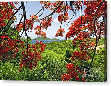 Tropical Bloom Canvas Print by George Oze