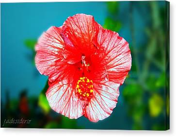Tropical Burst Redux Canvas Print