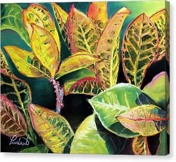 Tropical Colorful Croton Leaves Canvas Print by Prashant Shah