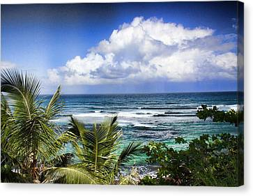 Canvas Print featuring the photograph Tropical Dreams by Daniel Sheldon