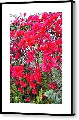 Tropical Flowers Of South Florida Canvas Print by Dora Sofia Caputo Photographic Design and Fine Art