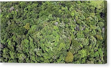 Tropical Forest Near Iguazu Falls Canvas Print