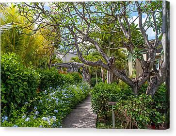 Tropical Garden. Mauritius Canvas Print by Jenny Rainbow