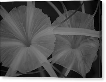 Tropical Garden Canvas Print by Miguel Winterpacht