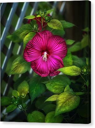 Tropical Hibiscus Canvas Print by Brenda Bryant
