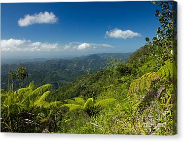 Canvas Print featuring the photograph Tropical Highlands by Jose Oquendo