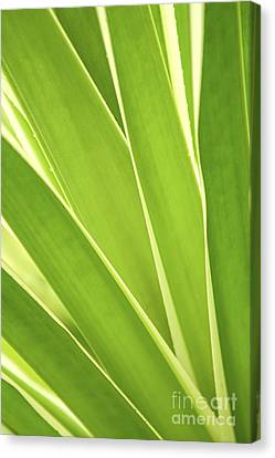 Tropical Leaves Canvas Print by Elena Elisseeva