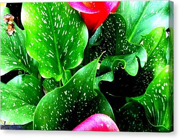 Tropical Leaves Canvas Print by Marianne Dow