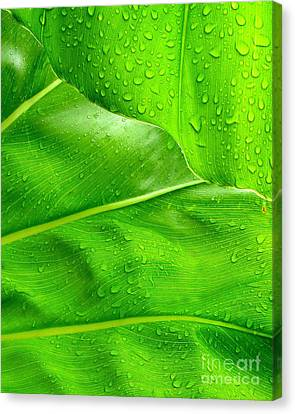 Canvas Print - Tropical Leaves by Ranjini Kandasamy