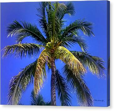 Tropical Palm Trees 8 Canvas Print