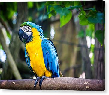 Tropical Parrot Canvas Print by Sara Frank
