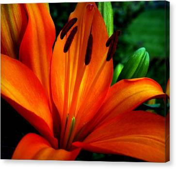 Tropical Passion Canvas Print by Karen Wiles