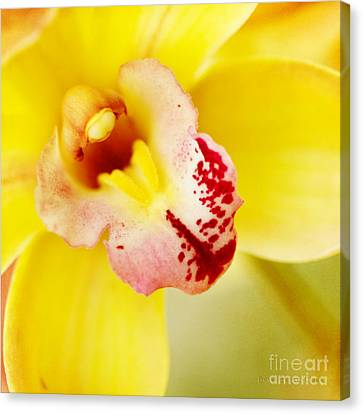 Tropical Punch Canvas Print by Beve Brown-Clark Photography