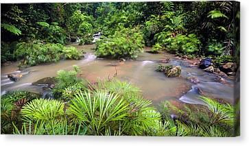 Tropical River Bank Canvas Print by Alex Hyde