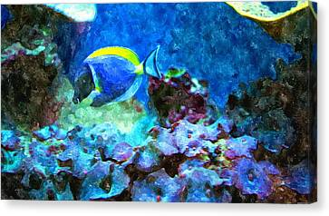 Tropical Seas Powder Blue Tang  Canvas Print by Rosemarie E Seppala