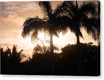 Tropical Sunrise Canvas Print