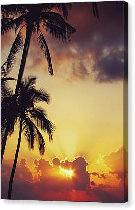 Tropical Sunset Canvas Print by Jenny Rainbow