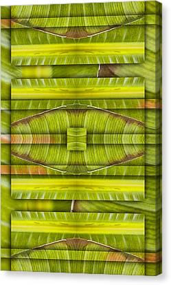 Tropical Three Canvas Print by Carol Leigh
