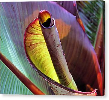 Tropical Water Canna Leaves Canvas Print by Janice Drew