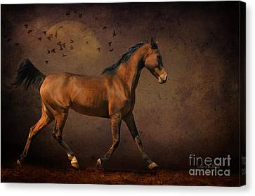 Crazy Horse Canvas Print - Trotting Into The Night by Karen Slagle