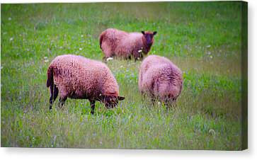 Trouble Comes In Three's Canvas Print by Bill Cannon