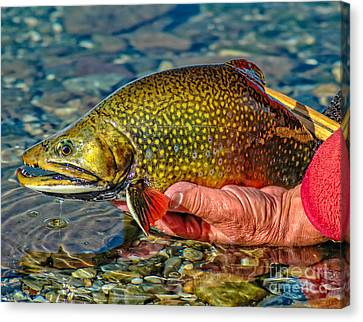 Trout Canvas Print by Edward Fielding