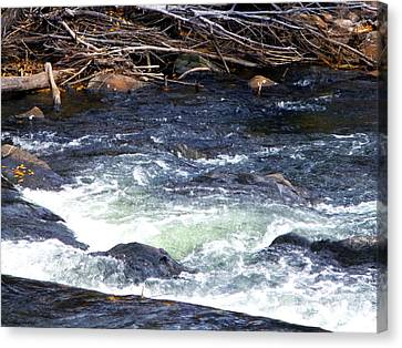 Canvas Print featuring the photograph Trout River by Jackie Carpenter