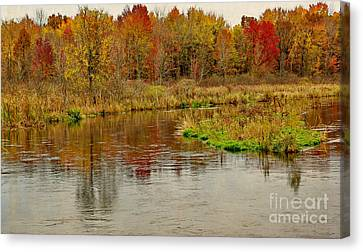 Color Me Trout Canvas Print - Trout Stream II- Textured by Gary Richards