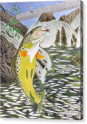 Trout Stream In May Canvas Print