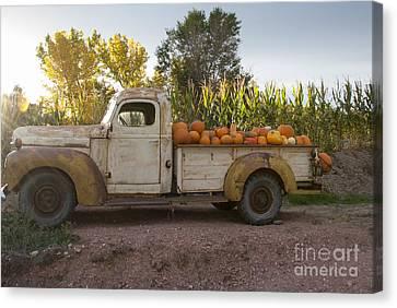 Pumpkin Time Canvas Print by Juli Scalzi