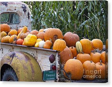 Truckful Of Pumpkins Canvas Print