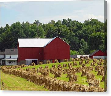 Amish Canvas Print - True Amish Farm by Gena Weiser