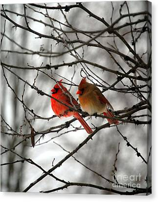 True Love Cardinal Canvas Print