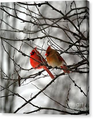 True Love Cardinal Canvas Print