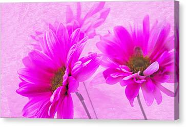 True Pink Canvas Print
