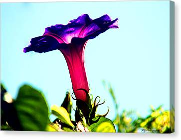 Trumpet Flower Canvas Print by Marty Gayler