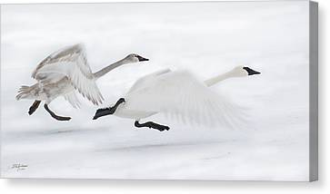 Trumpeter Takeoff Canvas Print