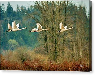 Trumpeters Five Canvas Print