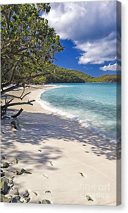 Trunk Bay Seclusion Canvas Print by George Oze