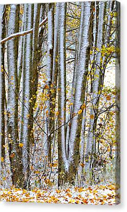 Trunks And Leaves Canvas Print by Susan Leggett