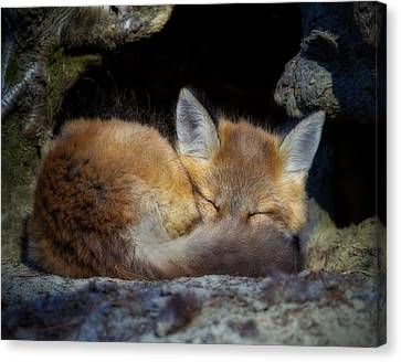 Fox Kit - Trust Canvas Print