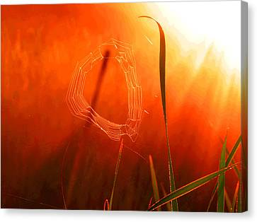 The Spider's Web In Golden Sunlight Canvas Print