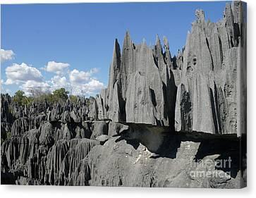 Tsingy De Bemaraha Madagascar 2 Canvas Print by Rudi Prott